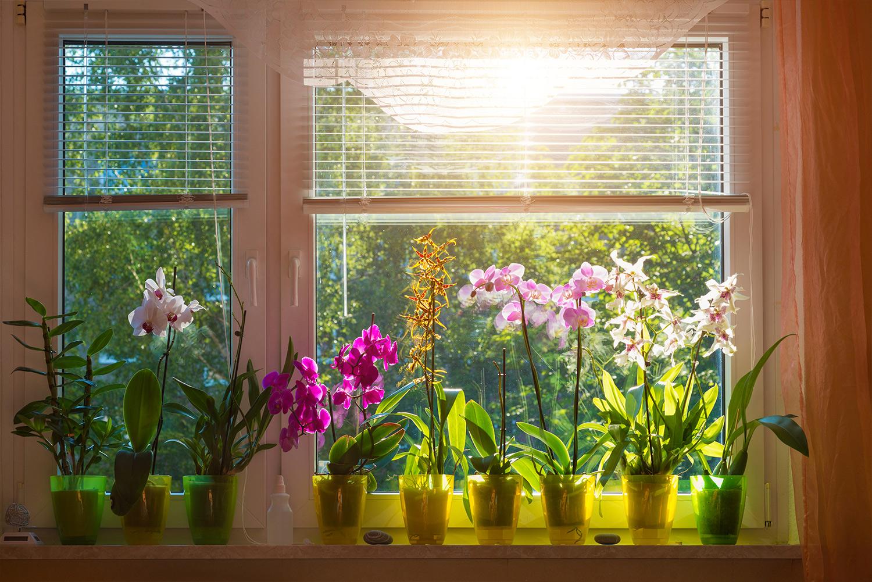 orhideje-clanak-3.jpg