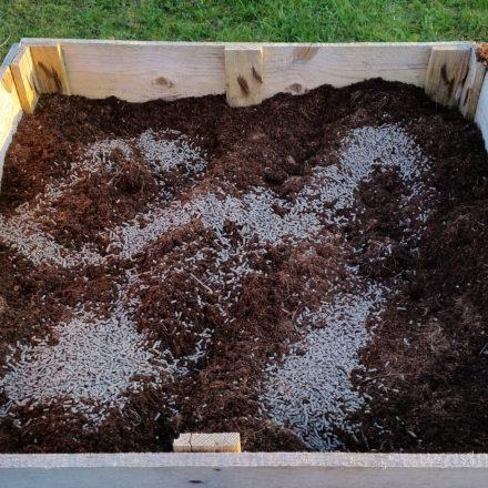 visoke-gredice-organski-vrt-in-zemlja-440x440.jpg
