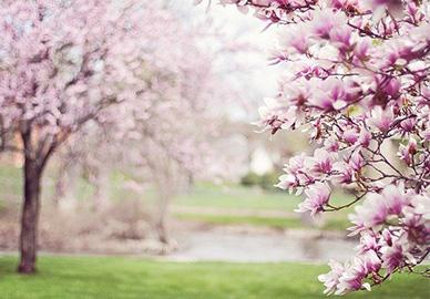 uporaba klime u proljeće